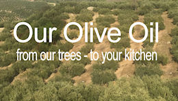 Antonio Celentano Olive Oil - from our trees - to your kitchen